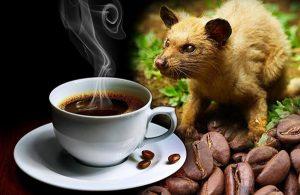 Cà phê chồn cao cấp
