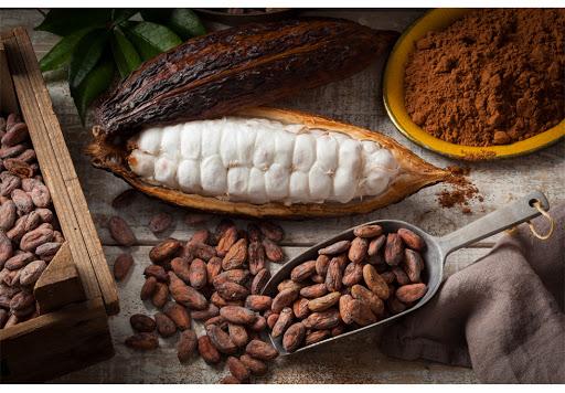 Cacao chất lượng