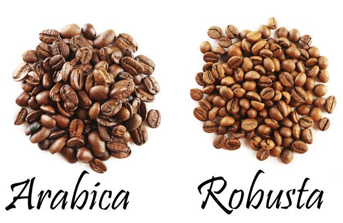 phan_biet_ca_phe_arabica_robusta
